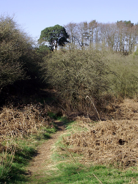 Footpath through woods north-east of Bridgnorth, Shropshire
