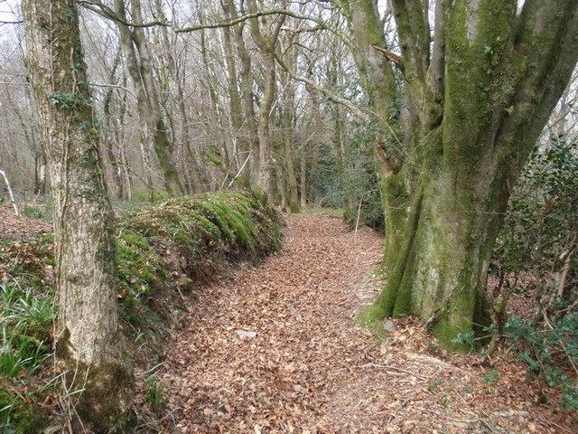 Cwm Tawel Woods, Cwmdwyfran
