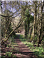 SO7394 : Woodland path east of Bridgnorth, Shropshire by Roger  Kidd