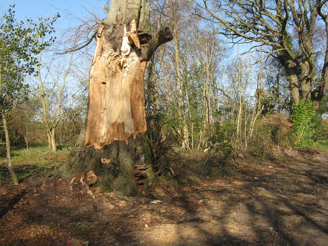 Damaged tree at Keith View