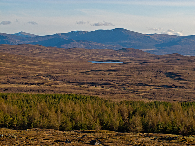 Forestry plantation near Meall Garbh