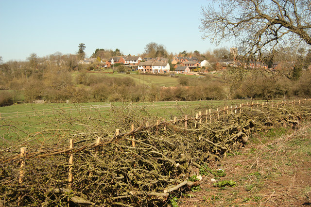 Newly laid hedge