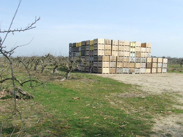 Fruit Trees And Boxes