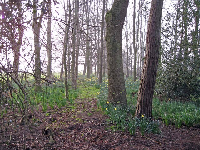 Footpath through wood north of Clonterbrook Farm