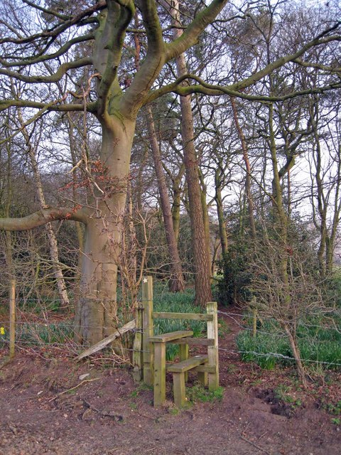 Stile into wood north of Clonterbrook Farm