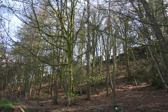 Cawley's Wood on Burwardsley Hill