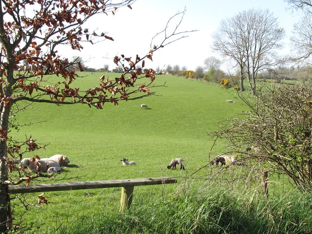 Sheep and lambs alongside Millvale Road