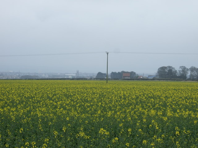 Crop field towards North Mount