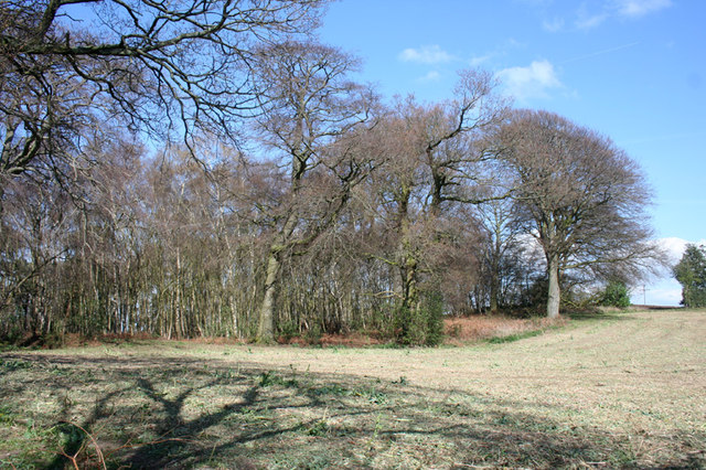 Woodland on Willow Hill, Burwardsley