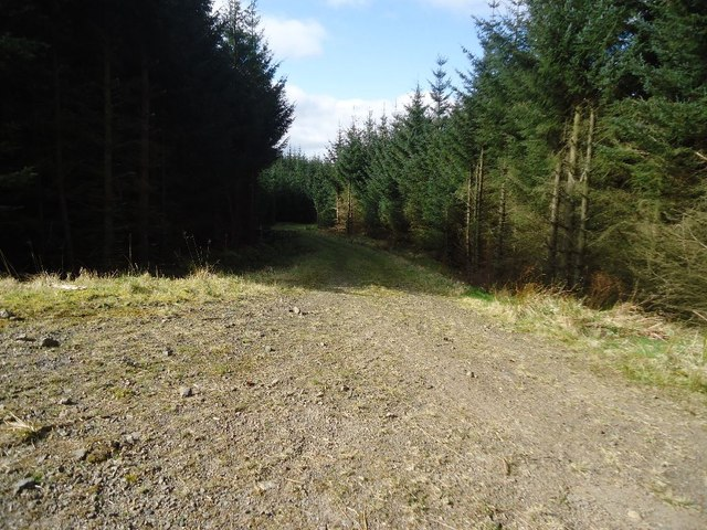 Carron Valley Forest, track [6]