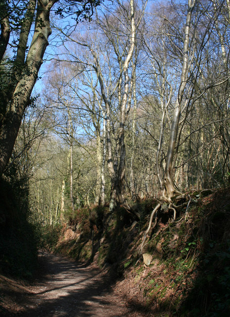 Sunken track through Peckforton Woods