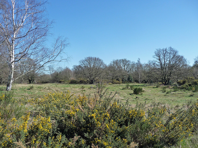 Barnes Common (2)