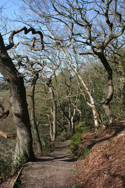 Deciduous woodland on the Sandstone Trail