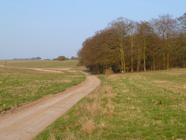 Road and grassland, Enford