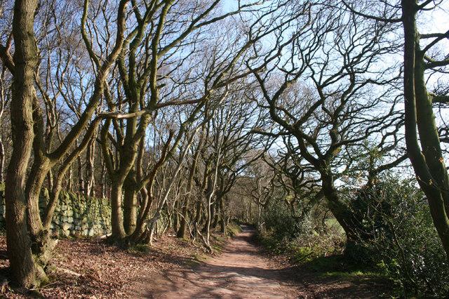 Deciduous woodland near Grig Hill Farm