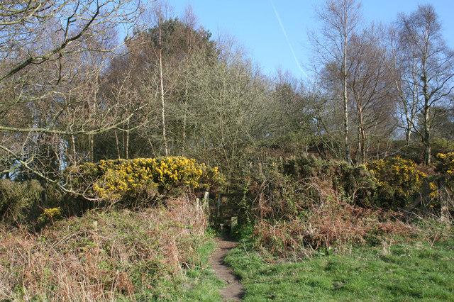 Footpath near Bulkeley Hill Farm