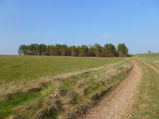 Track and plantation, Everleigh