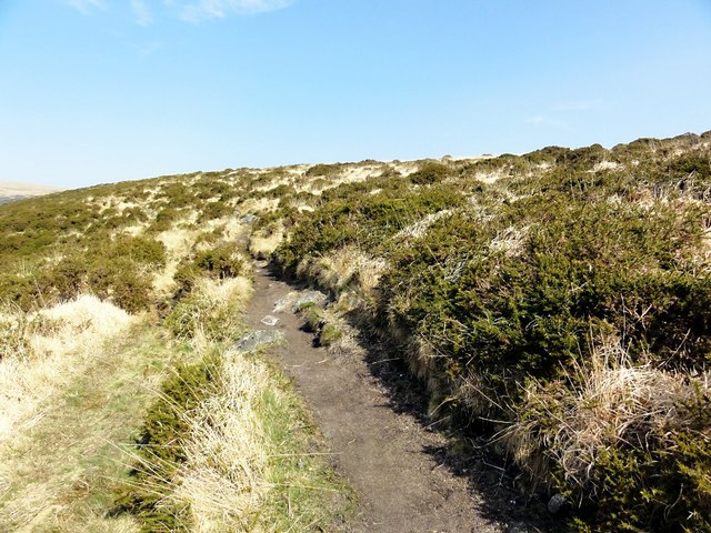 Footpath Through Gorse and Grass