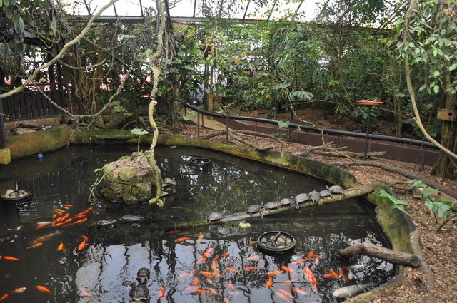 South wight amazon world zoo fish lewis clarke for Amazon fish ponds