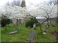 TQ1171 : Springtime in St George's Churchyard, Hanworth by Ian Yarham