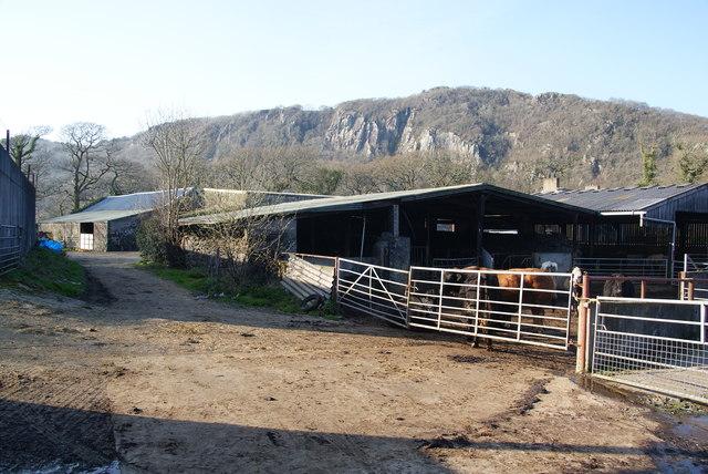 Farm Yard Farm