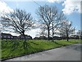 SE3128 : Trees in the middle of the ring road, Belle Isle by Christine Johnstone