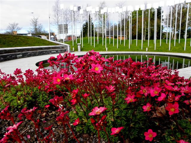 Floral display, Omagh Memorial Garden