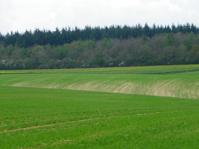 Spring crops, Bishopstone