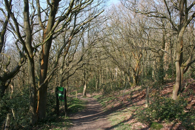 Deciduous woodland on Resting Hill