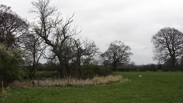 Pond near Tabley Brook