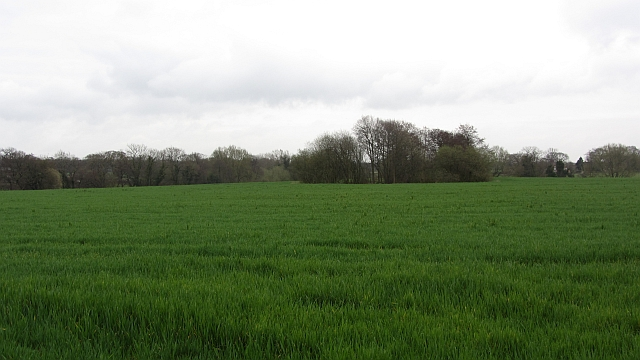 A large field