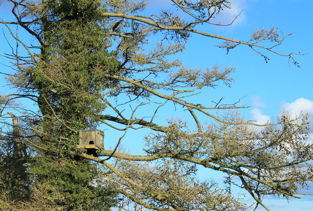 2012 : Owl box at the foot of Codford Hill