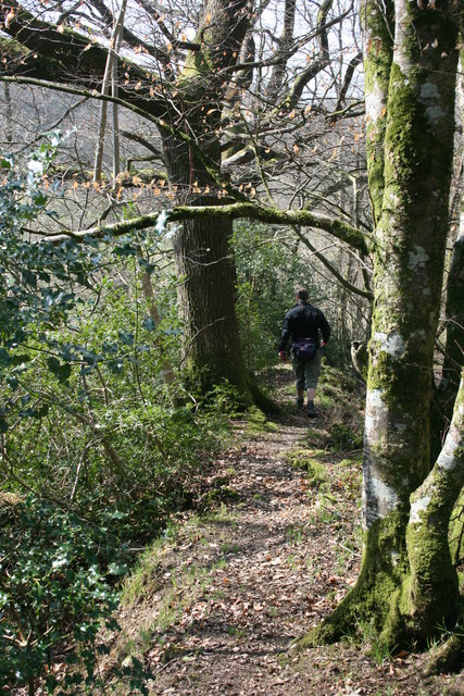 Wood path below Higher Mackham