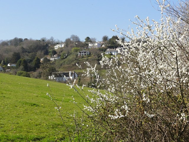 Blackthorn Flower at Maidencombe