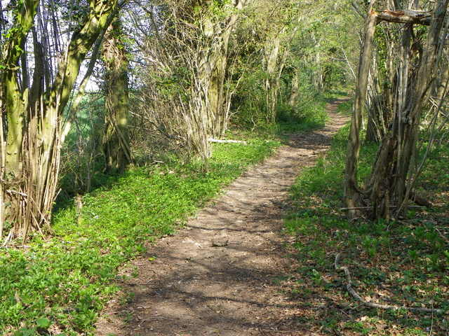 Bridleway to the Ox Drove