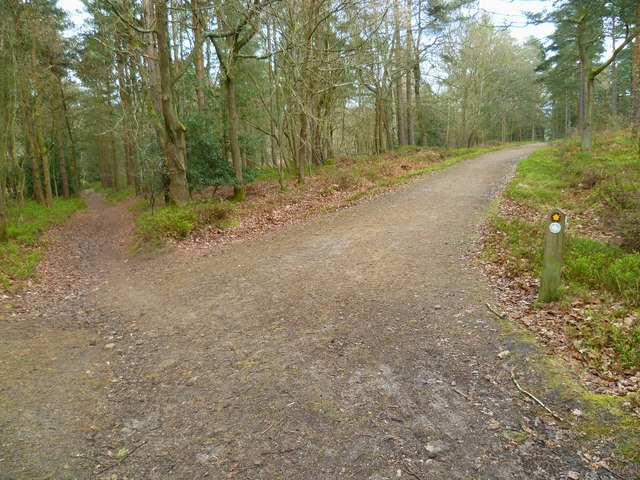 Bridleway and footpath crossing in Hurt Wood