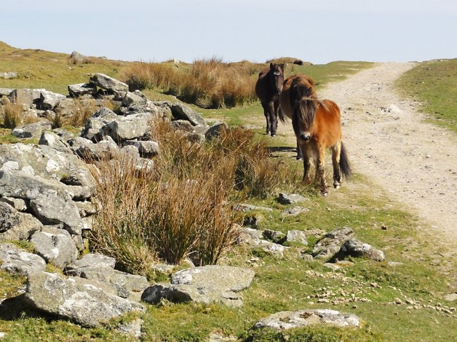 Dartmoor Ponies at Eylesbarrow Tin Mine