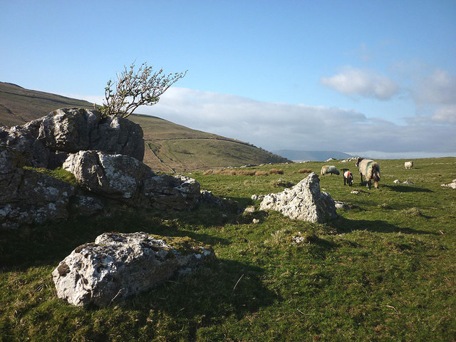 Sheep and lambs on Stone Rigg