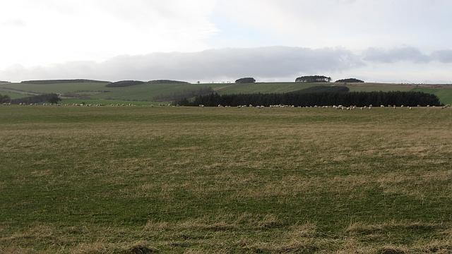 Grassland, Mindrum
