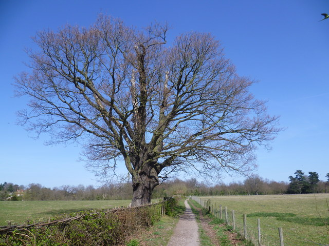 Footpath on Hawkwood Estate