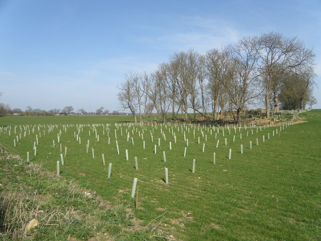 Tree planting near Ashton