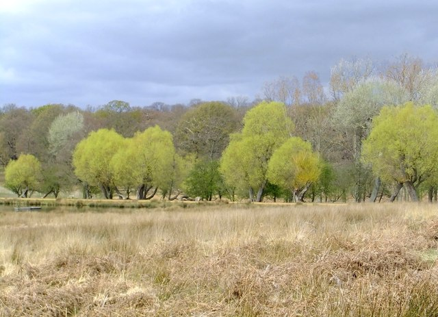 Trees by the Lower Pen Pond, Richmond Park, in early spring