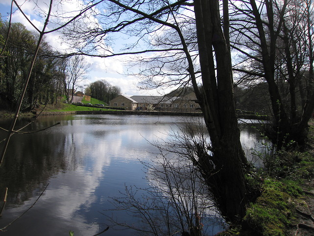 Mill pond, Wisewood