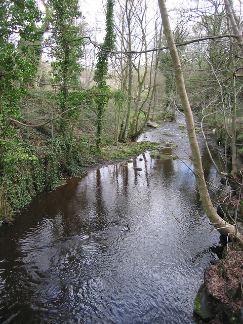 River Loxley adjacent to Olive mill pond