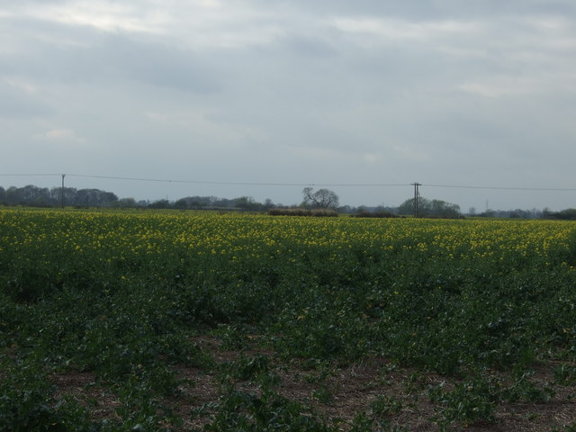Farmland near Hawton