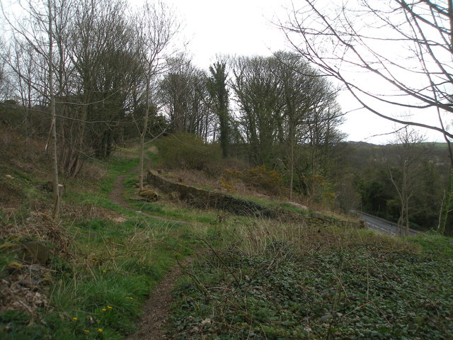 Paths in the old quarry above North Road