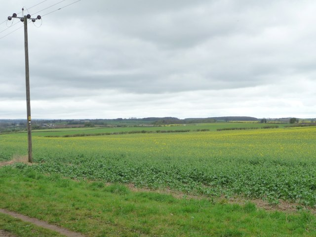 Telegraph pole alongside oilseed rape field