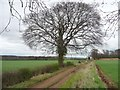 SE4044 : Winter tree on Compton Lane by Christine Johnstone