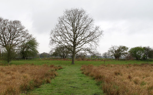 Oak on the Spider Trail