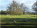 TF7818 : Sheep in the grounds of High House, West Acre by Richard Humphrey
